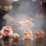 なぜ霊長類(サル目)は温暖、熱帯地域にしか生息していないのでしょうか? 人類の起源である新人も霊長類ですが、こちらは全バイオームに定着したのに、他の霊長類は分布するバイオームが限られているのはなぜなの...