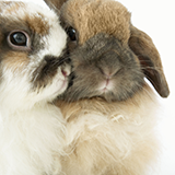 ペットに害を与えない消臭できる部屋ミストとかスプレーはありますか?