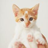 ペット 種類を問わず禁止 と書いてあるマンションはハムスターも禁止ですか?