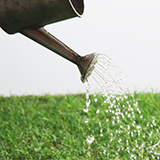 去年、改良センチピードグラス ティフ・ブレアという品種の芝生を植えましたが、所々で芝生が枯れ、砂が露出しています。枯れた所に購入した同種の種を蒔こうと思いますが、どのような点に注意すればいいですか?...