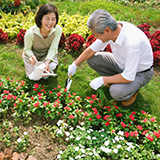 3,4年のスパニッシュビューティーがあります。 地植えにして壁にはわせてあります。すごく元気で春には200~300の花を咲かせてくれます。 選定について教えてください。 冬の選定と夏の今の時期もす...