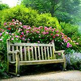 うどんこ病、斑点病などは、落葉後はどうなりますか? 自然治癒して来年また新しい緑葉が出てくるのでしょうか?  恐らくハナミズキがうどんこ病、紫陽花が斑点病か炭そ病なのだと思います。  ここ数ヶ月、庭いじ...