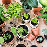 家庭菜園初心者です! 夏野菜(ナス、キューリ、枝豆、オクラ、トウモロコシ)などの水やりはどうしたらいいのでしょうか? 教えてください。