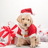 コロナ渦だけど今年のクリスマスはサンタさん来てくれるかな?