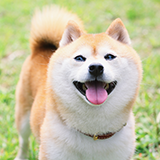 小型犬の柴犬にドッグフードは小型犬用、中型犬用どちらを買ったらいいのでしょうか? また、小型犬中型犬関係なく食べられるドッグフードなどはありますでしょうか? 教えていただけると有難いです、