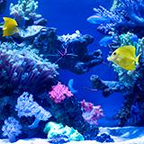 グッピー等の熱帯魚用の餌について。 現在メダカとグッピー等を飼っています。 メダカの餌はタンパク質50%を目安として使っています。 室内水槽の熱帯魚用の餌としては、水槽に同梱されていた試供品のグッピー元...