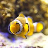 あなたが飼っている熱帯魚の中で、平均サイズよりかなり小さいサイズにしか育たなかった熱帯魚って居ますか? 自分はオスカーが10cmほどで止まっていて、デルヘッジが25cmで止まってしまいました