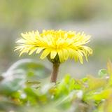 ゼフィランサスの栽培について教えてください。春に園芸店でゼフィランサス(白)を購入して鉢に植えました。 その後葉が10CMくらいまで伸びましたが、花は全く咲きません。現在も葉は元気に茂っています。これから冬に向かうのに、このままで良いのか掘り起こして保存した方が良いのかを教えてください。近畿地方です。