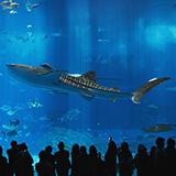 シートレインランドと名古屋港水族館は同じ敷地内ですか?また、入場券は違いますか?