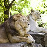先日上野動物園に行ったら、外国人がたくさん来ていました。 上野動物園って、外国人観光客がわざわざ行くほど充実した動物園なのでしょうか? 外国の動物園に行ったことがないので、上野がどのくらいの動物園な...