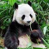 上野動物園で初めてのゾウが誕生しましたが、象印ですか?