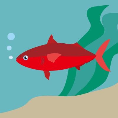 【C】 真っ赤な魚