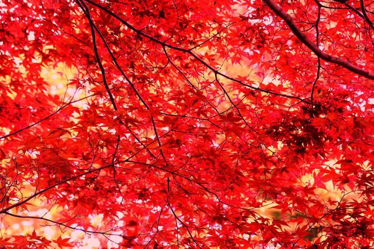 いざ紅葉デート♪ 東京&東京近郊の紅葉ロマンチックスポット20