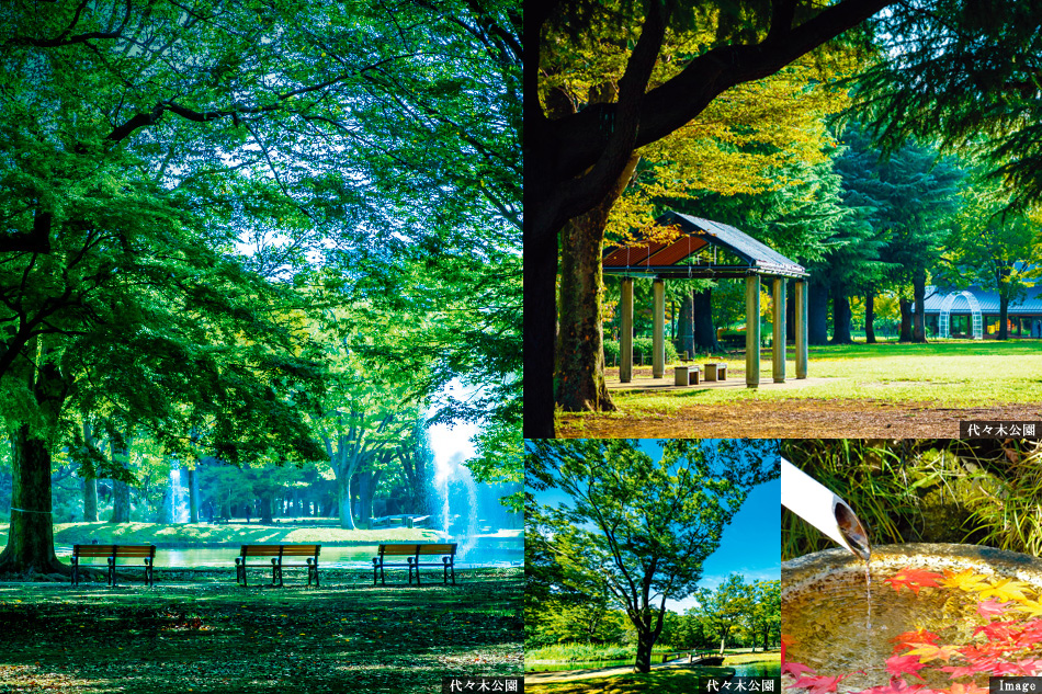 ※掲載の環境写真は2019年3月、10月に撮影したものです。※周辺環境は将来にわたり保証されるものではございません。