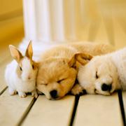 飼っても良いペットの種類は事前に確認