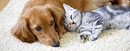 ペット飼育可能な中古マンション