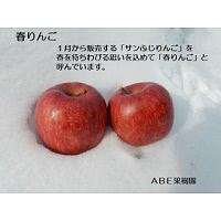 春りんご(サンふじ)3kg
