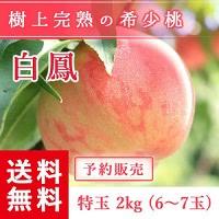 福島県産 桃 もぎたて完熟 白鳳