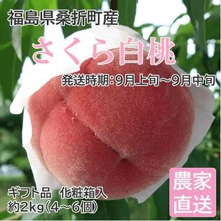 福島県桑折町産 さくら白桃 ギフト品 約2kg