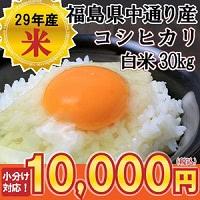 福島県中通り産 コシヒカリ 白米