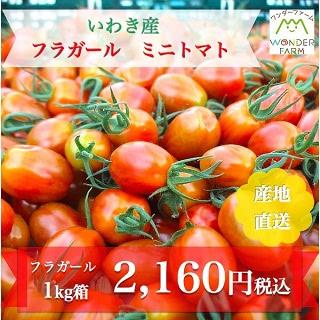 いわき産 フラガール ミニトマト 1kg箱