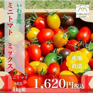 いわき産 ミニトマト ミックス 1kg詰め
