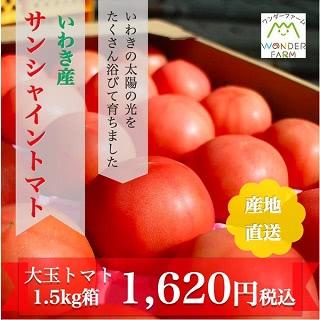 いわき産 サンシャイントマト 大玉トマト 1.5kg箱