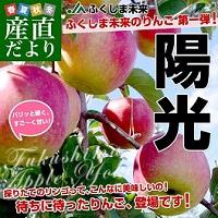 甘みの強い陽光りんご