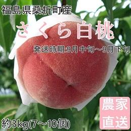 さくら白桃 通常品 約3kg