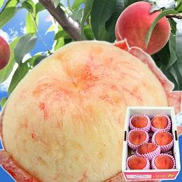 福島の桃 あかつき 1.8kg