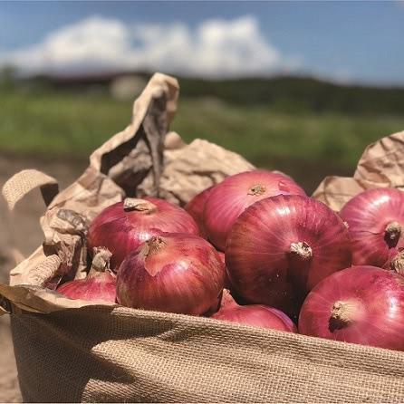 有機栽培農家の赤玉ねぎ 5kg