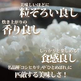 福島県産天のつぶ 精米20kg