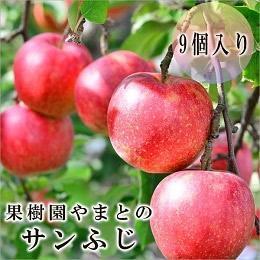 果樹園やまとのサンふじ  9個
