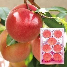 福島くだもの畑の桃