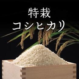 特栽コシヒカリ 精米5kg