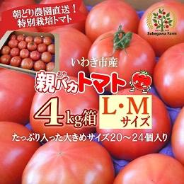 親バカトマト約4kg