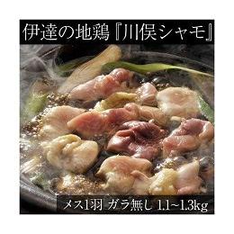 伊達の地鶏「川俣シャモ」メス1羽