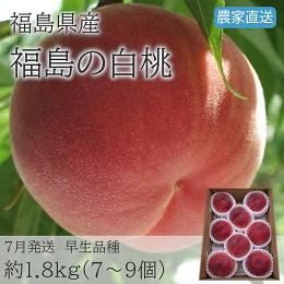 福島の白桃 1.8kg