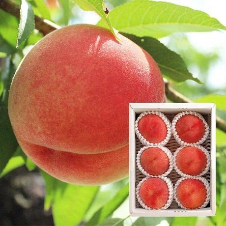 あいはら果樹園 旬の桃(小箱)