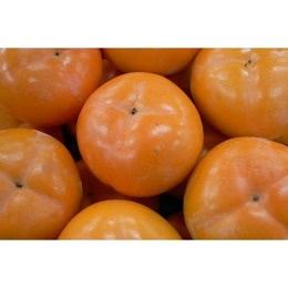 会津みしらず柿 約5kg
