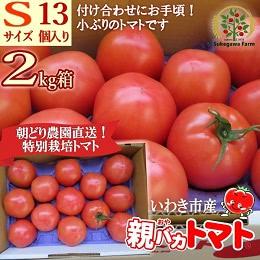 親バカトマト 約2kg