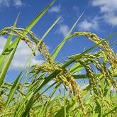 農家から、おいしいお米を、お手頃価格で直送します