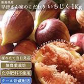 新潟県産 生イチジク 農薬不使用 1kg