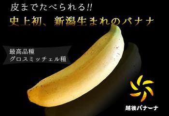 新潟生まれのバナナ 越後バナーナ