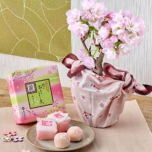 桜鉢「旭山」と清月堂「旬のおとし文 麗」のセット
