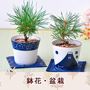 鉢花・盆栽