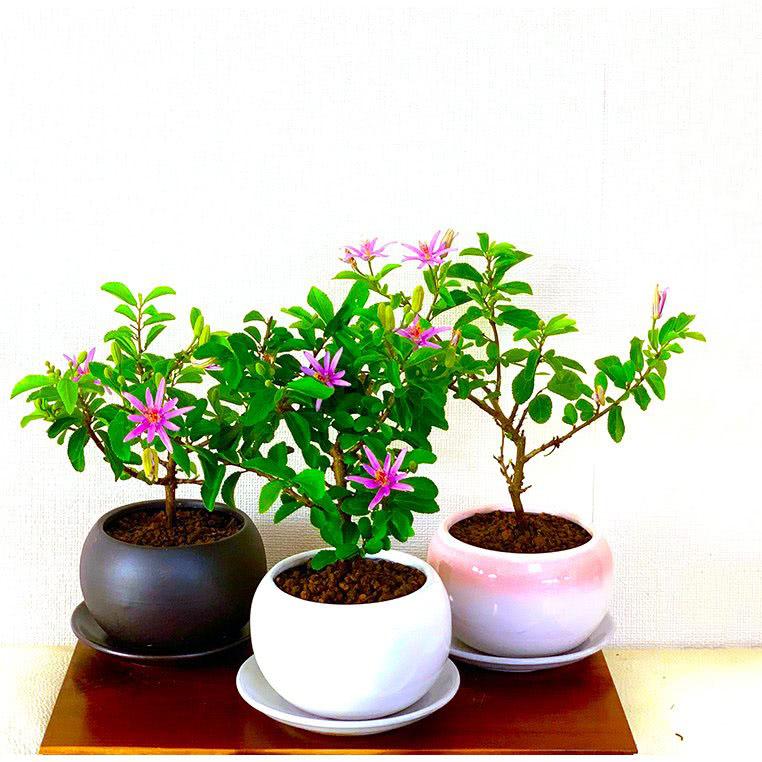 盆栽、苔玉