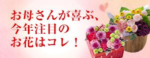 母の日【注目フラワー】