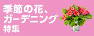 季節の花、ガーデニング特集 花