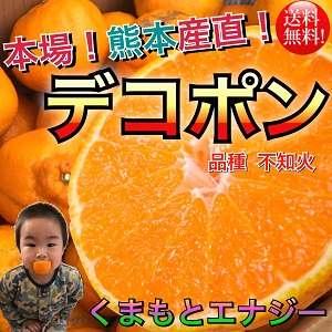 熊本原産 デコポン